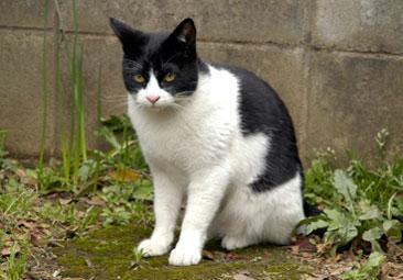 Cat38jg.jpg