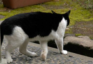 Cat47jl.jpg