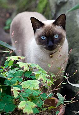 cat051113_ter.jpg