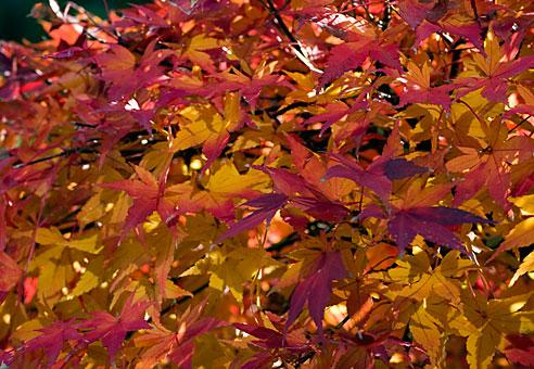 leaf00030512.jpg