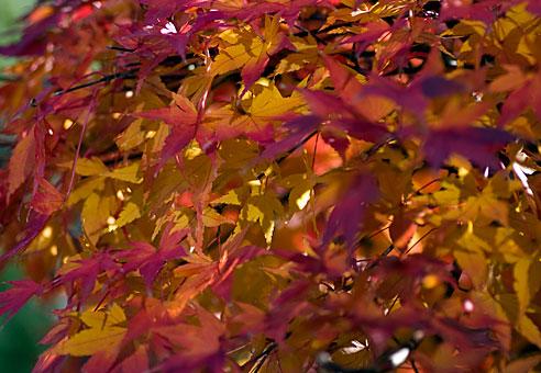 leaf020512.jpg